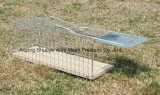 Gefalteter Metal Wild Cat Catcher Cage für Trapping