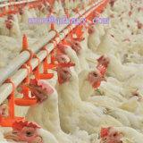 Maquinaria de cultivo personalizada das aves domésticas com construção da vertente do aço no bom preço