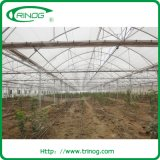 Span multi Film Greenhouse pour Vegetables