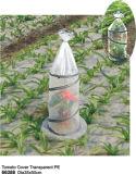 Numéro 66388 couverture transparente de tomate de tissu de PE de jardin