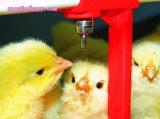 Gevogelte Farm Equipment voor Broiler Layer en Breeder met Design en Installation