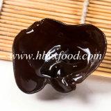 Alimento salutare di legno disidratato del fungo dell'orecchio