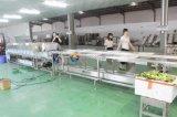 Linha das máquinas de classificação do pulverizador da fruta 2016 & da limpeza vegetal para a seleção e a preparação