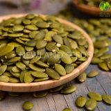 Noccioli verdi cinesi aa dei semi di zucca della pelle di lustro in America
