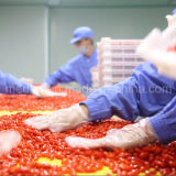 Mispel ETB getrockneter Ningxia rotes organisches Wolfberry
