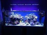 LEIDENE van de Zonsopgang en van de Zonsondergang van Aqua van It5012 het OceaanLicht van het Aquarium