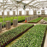 Het commerciële Landbouw Groene Huis van de Tunnel voor het Plantaardige Groeien
