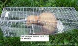 Ловушка клетки захвата в реальном маштабе времени людская для Weasels