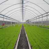 최신 판매 농업 플레스틱 필름 다중 경간 온실