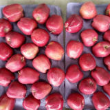 Neuer frischer chinesischer roter Apple mit Karton