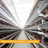 チンタオは層/Henのための鋼鉄養鶏場装置に電流を通した