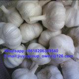 Чеснок верхнего качества Jining свежий нормальный белый