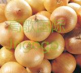 중국 신선한 좋은 품질 황색 양파