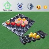 Umweltfreundliches pp. frisches Obst- und Gemüsedes Nahrungsmittelgrad-verpackentellersegment