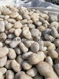 정원사 노릇을 하기를 위한 자연적인 화이트 리버 자갈 돌 크기 2-3cm /3-5cm /5-8cm
