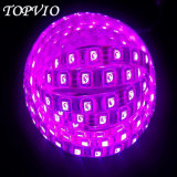 IP20 DC12V/24V 60LEDs/M 5050 백색 유연한 LED 지구 빛