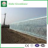 농업 다중 경간 Vegeatbles를 위한 플라스틱 녹색 집
