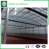 Multi serre della pellicola della portata di agricoltura per la verdura