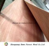 contre-plaqué d'emballage de Bintangor de faisceau de peuplier de 12mm