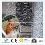 Rete metallica decorativa esagonale galvanizzata del pollo di /PVC da vendere