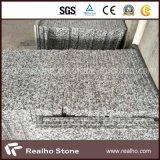 Stanza da bagno grigia Vanitytop del granito G439 di Pauline con il singolo dispersore della porcellana
