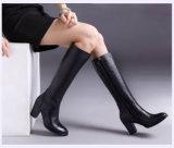 Полные ботинки женщин застежки -молнии высокой пятки квадрата кожи икры