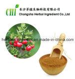 Extrato 100% natural de Butcherbroom 10% -20% Ruscogenins for Foods Supplement