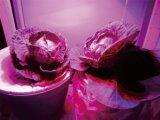 3750V Hallo-Potenziometer geprüfte LED wachsen Licht UFO-18W