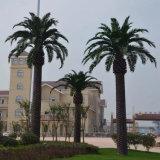 테마 파크를 위한 인공적인 중동 대추 야자 나무 옥외 8 미터
