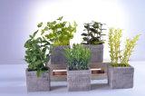 Belle piante delle erbe di simulazione dei bonsai in POT del cemento