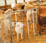 Гальванизированная панель загородки овечки овечки/строба Малыш-Доказательства портативная с сеткой