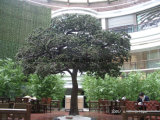 Albero di pino artificiale del Podocarpus del rifornimento della fabbrica