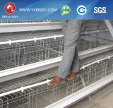El equipo de la avicultura acoda la jaula del pollo para África