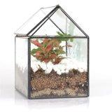 집 모양 기하학적인 유리제 Terrarium