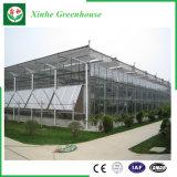 과일 꽃을%s 경작하거나 정원 다중 경간 유리제 녹색 집