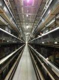 Jaula galvanizada fábrica de la capa del pollo/jaula de batería