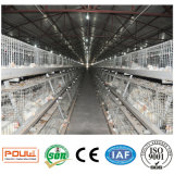 Le poulet à rôtir de ferme avicole met en cage le matériel de système