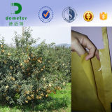 Proteção de papel Growing impermeável por atacado do saco da uva da fruta de Peru
