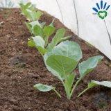 紫外線抵抗力がある園芸植物カバー中国の卸し売り農業PP非編まれたファブリック