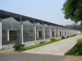 공장 할인 가격과 Venlo 작풍을%s 가진 직류 전기를 통한 강철 프레임 녹색 집