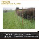 Entfernbarer Bereich-Zaun verwendet in der Wiese für Schafe und Vieh