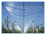 Weave батиста/английский тип анти- сеть окликом для рынков Europen