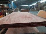 madera contrachapada de Bintangor del grado de la base BB/CC del álamo de 15m m