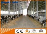 Vertiente profesional del ganado de la estructura de acero con diseño del equipo que corresponde con