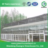 Serra di vetro di verdure di vendita calda di vetro coperto della serra