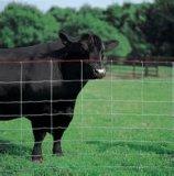 Rete fissa di Fild della mucca dell'erba