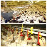 Автоматические фидеры и потаторы цыпленка