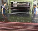 Le film commercial de treillis métallique a fait face au contre-plaqué pour la construction