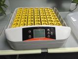 Incubadora Yz-56s do ovo dos ovos do controle de temperatura automática 56 de Hhd