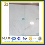 Castro White (Glorious White) Marble Tiles para Floor e Wall